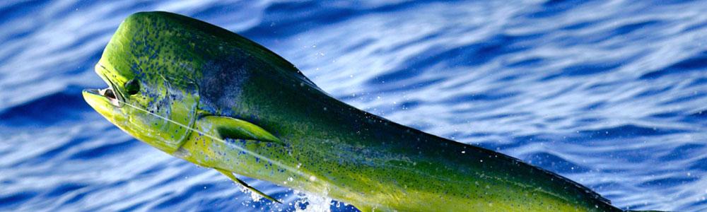 Fishing - Light Tackle