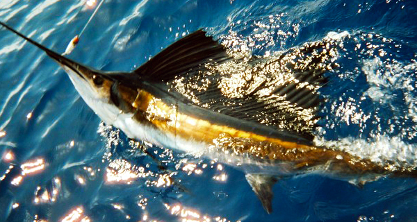 Aquaworld Cancun 34 Private Fishing Charter Image
