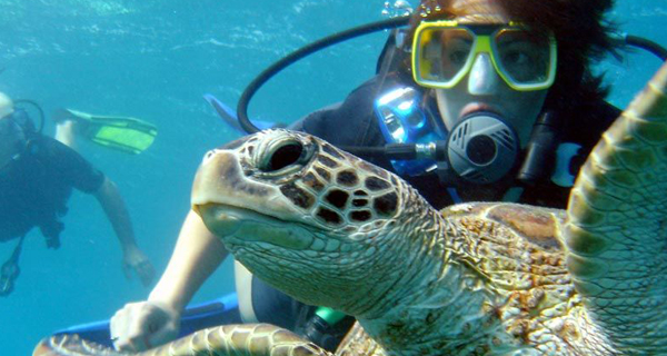 Aquaworld Cancun Sunset 2 Tank Reef Dive Image Gallery