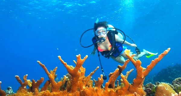 Aquaworld Cozumel 2 Tank Reef Dive Image Gallery
