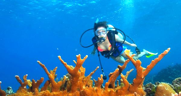 Aquaworld Cozumel 2 Tank Reef Dive Image Gallery