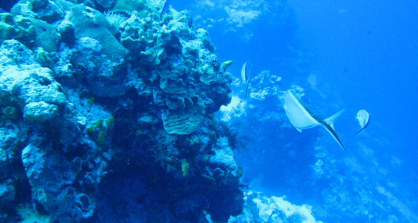 Cozumel Daytrip from Cancun with Wall Reef Scuba Dive Image Gallery