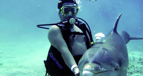 Dive with Dolphins at Cozumel
