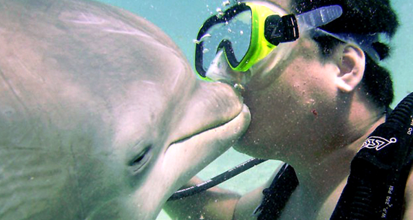 Dive with Dolphins at Cozumel Image Gallery