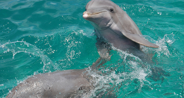 Royal Dolphin Swim at Puerto Aventura Image Gallery