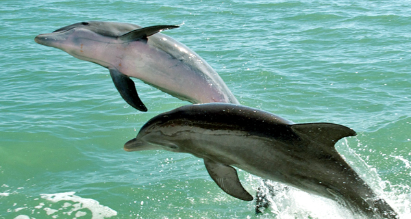 Dolphin Swim Adventure at Isla Mujeres Image Gallery