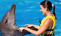 Dolphin Swim Adventure at Puerto Aventura Image