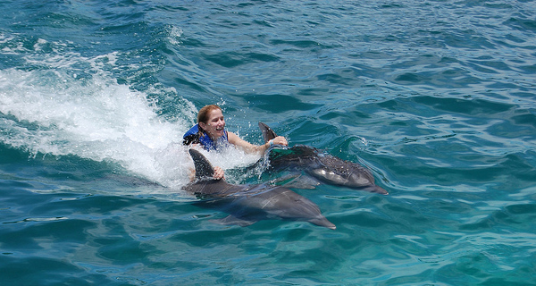 Dolphin Swim Adventure at Puerto Aventura Image Gallery