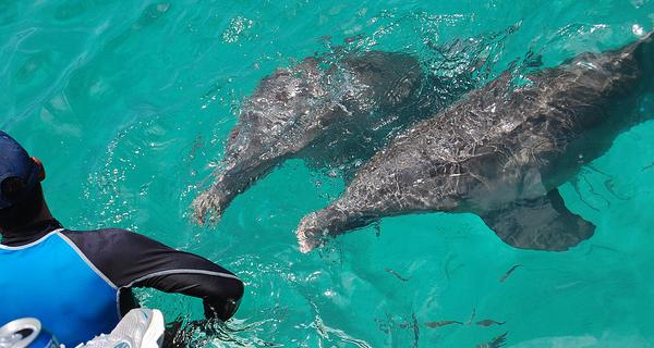 Royal Garrafon and Dolphin Encounter at Isla Mujeres Image Gallery