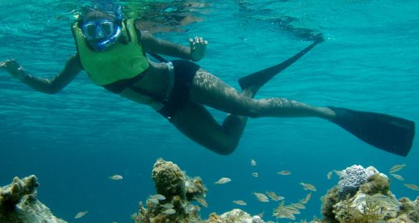 Paradise Reef Snorkeling Cozumel Image Gallery