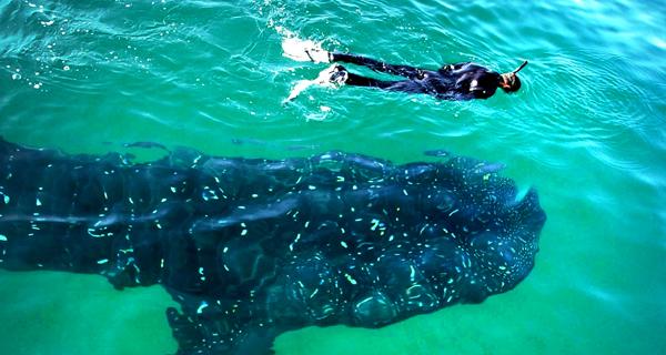 Playa Uva Catamaran Snorkel And Beach Pass Image Gallery