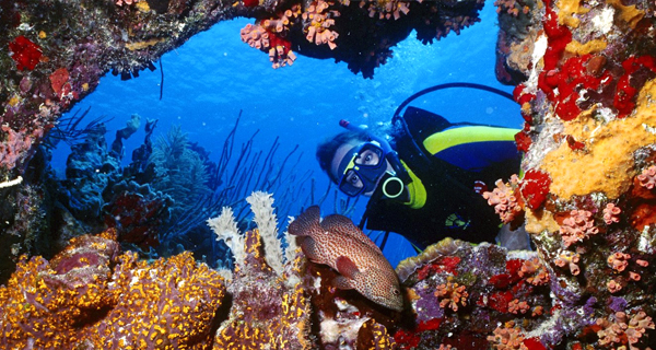Playa Uva Two Tank Discover Scuba Dive Image Gallery