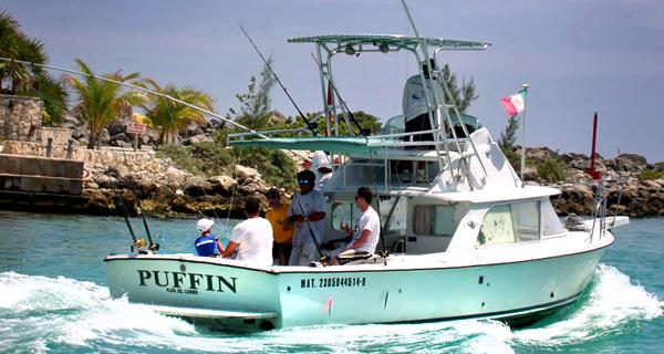 Puffin - 31 - Bertram Image Gallery