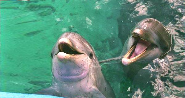 Royal Dolphin Swim at Cozumel Image