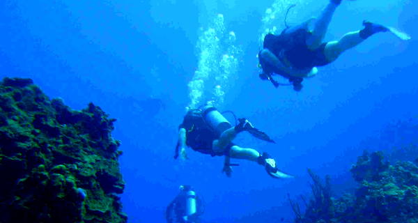 Scuba Playa One Tank Dive Image Gallery