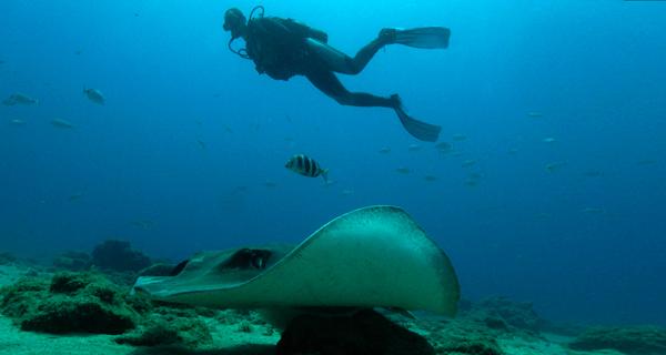 Stingray Beach Discover Scuba Diving Image Gallery