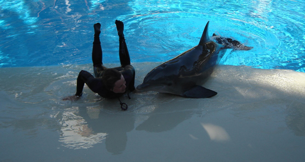 Dolphin Trainer For Life at Puerto Aventura Image Gallery